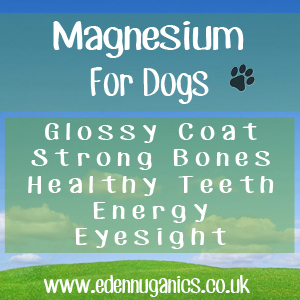 Dogs and Magnesium Deficiency