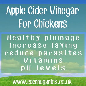 Using ACV for Chickens