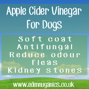 ACV for Dog use
