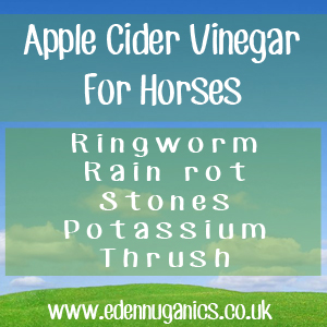 ACV For Horse Breeders