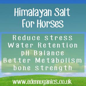 Himalayan Salt Lick for Horses